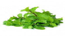 Mint Leaves (Pudina) 1 Bunch